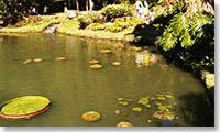 Jardin Botanic (Rio de Janeiro)